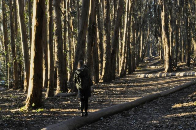 wood_line2