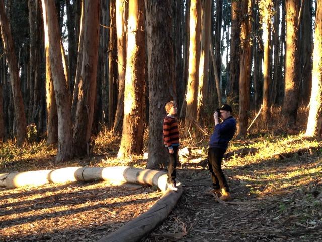 wood_line4