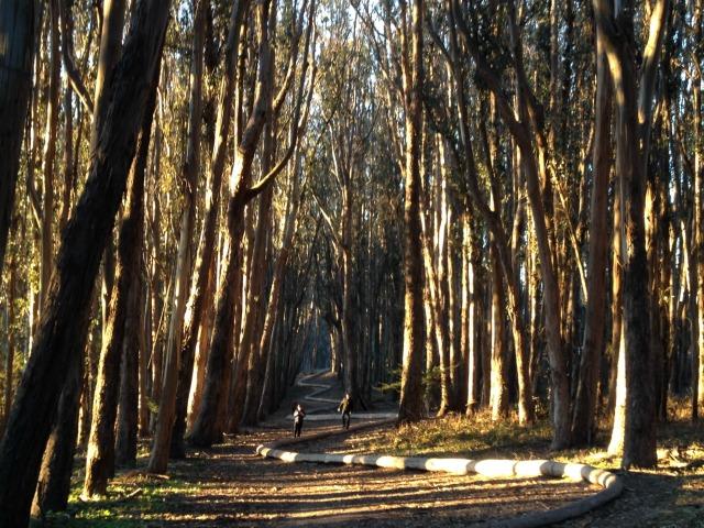 wood_line5